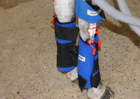 Horse Tendon Injuries
